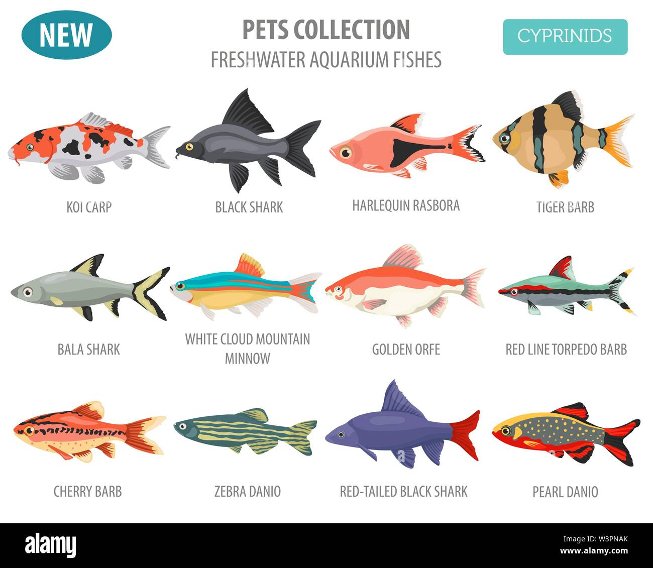 Freshwater aquarium fishes breeds icon set flat style isolated on white. Cyprinids. Create own infographic about pets. Vector illustration Stock Vector