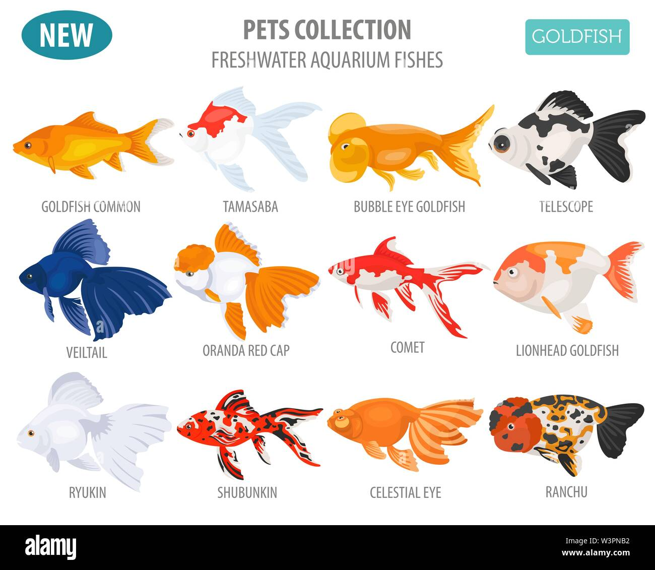 Freshwater aquarium fishes breeds icon set flat style isolated on white. Goldfish. Create own infographic about pets. Vector illustration Stock Vector