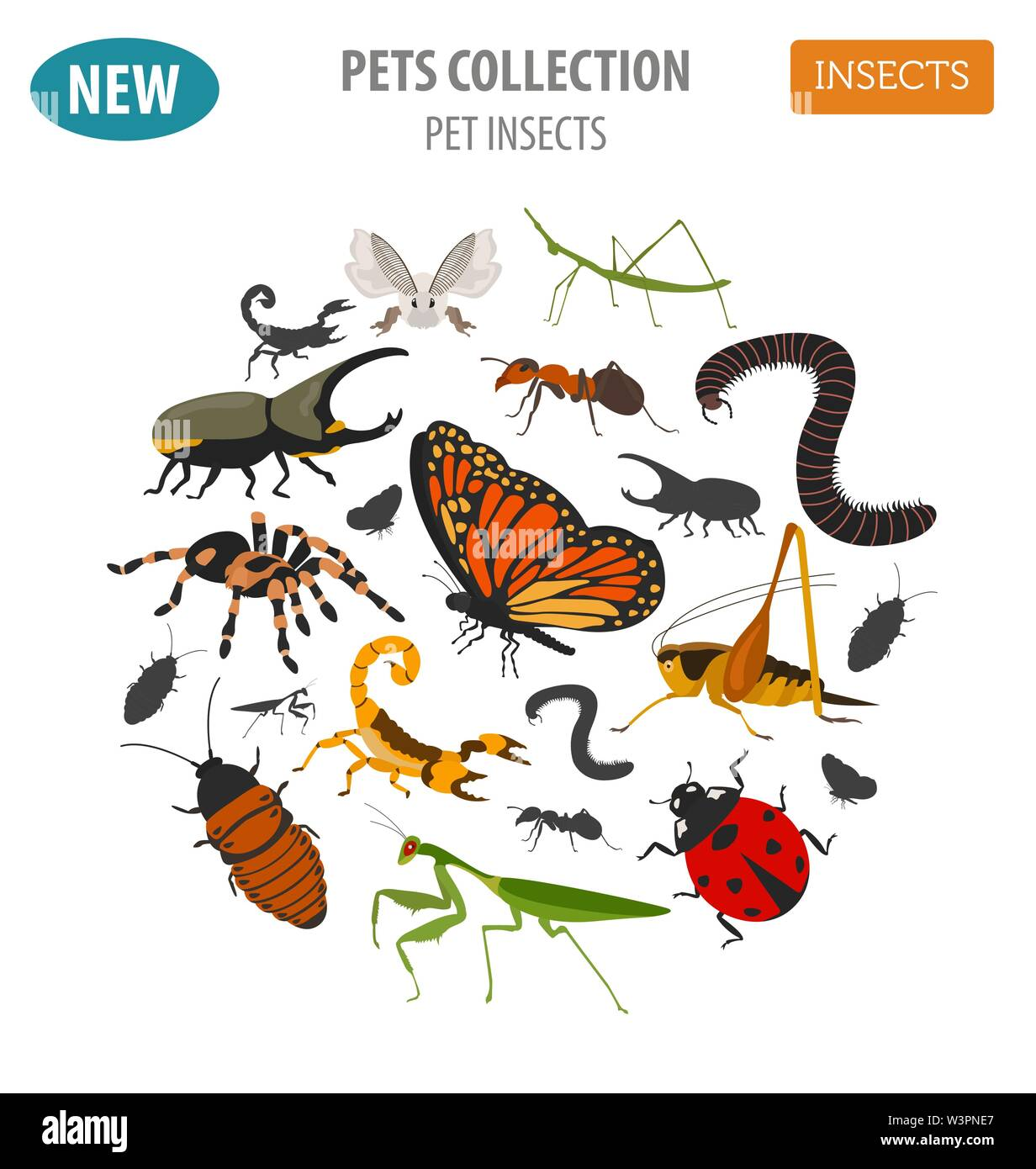 Pet insects breeds icon set flat style isolated on white. House keeping bugs, beetles, sticks, spiders and other collection. Create own infographic ab - Stock Image
