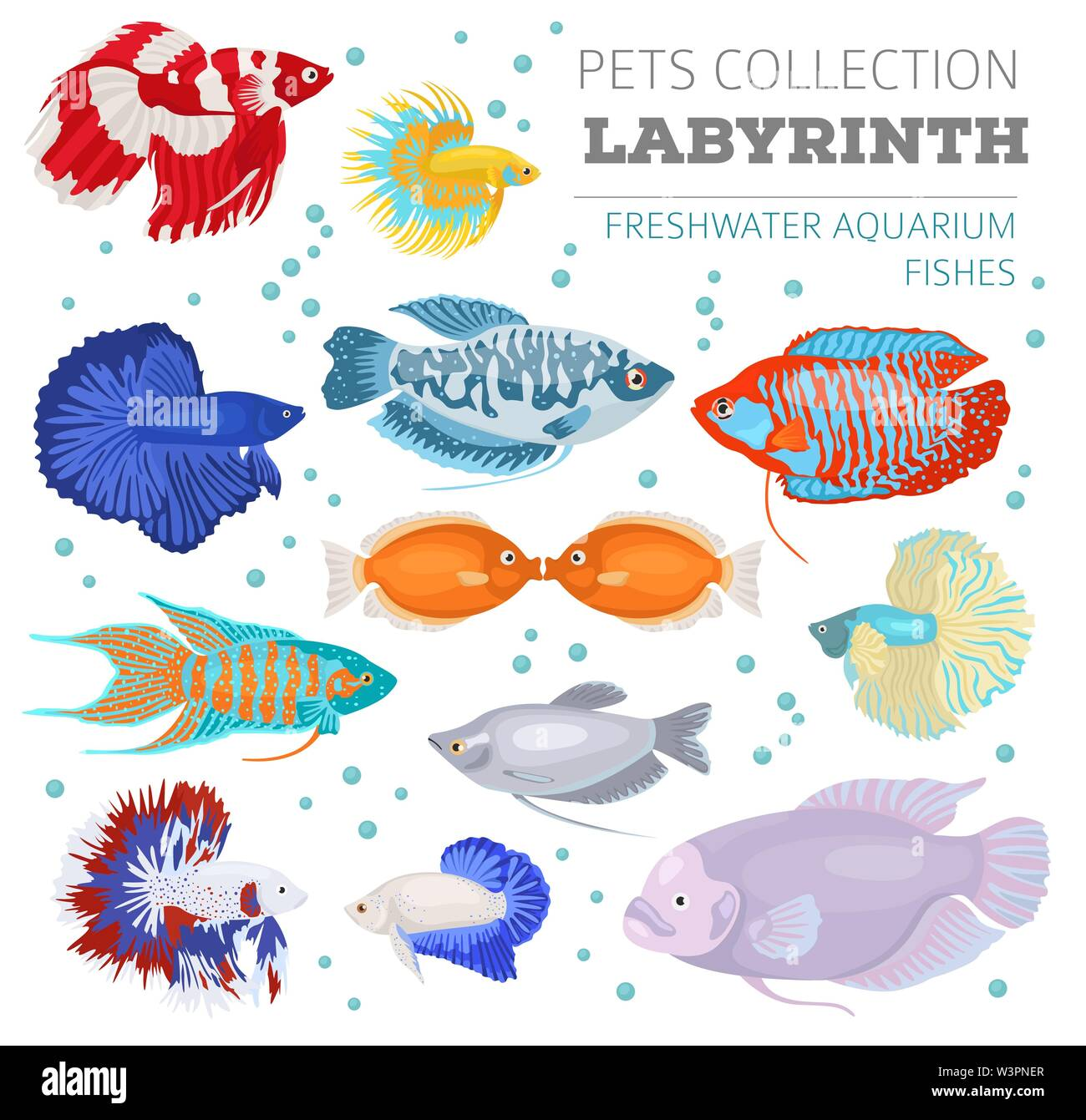 Freshwater aquarium fishes breeds icon set flat style isolated on white. Labyrinth fishes: betta, gourami. Create own infographic about pets. vector i Stock Vector