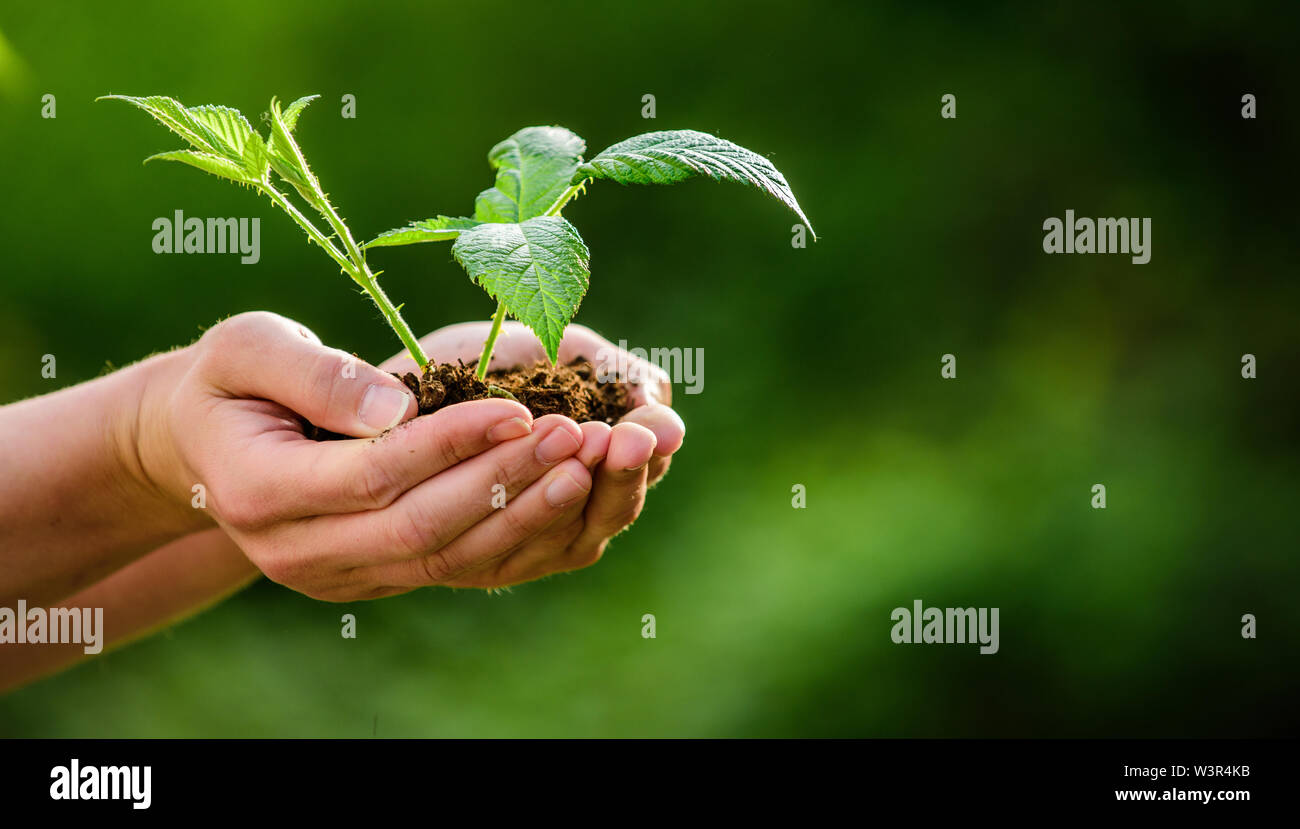 Earth day. ecology environment concept. happy earth day. Eco living. farming and agriculture. Gardening. new life birth. plant in ground in hands. car - Stock Image