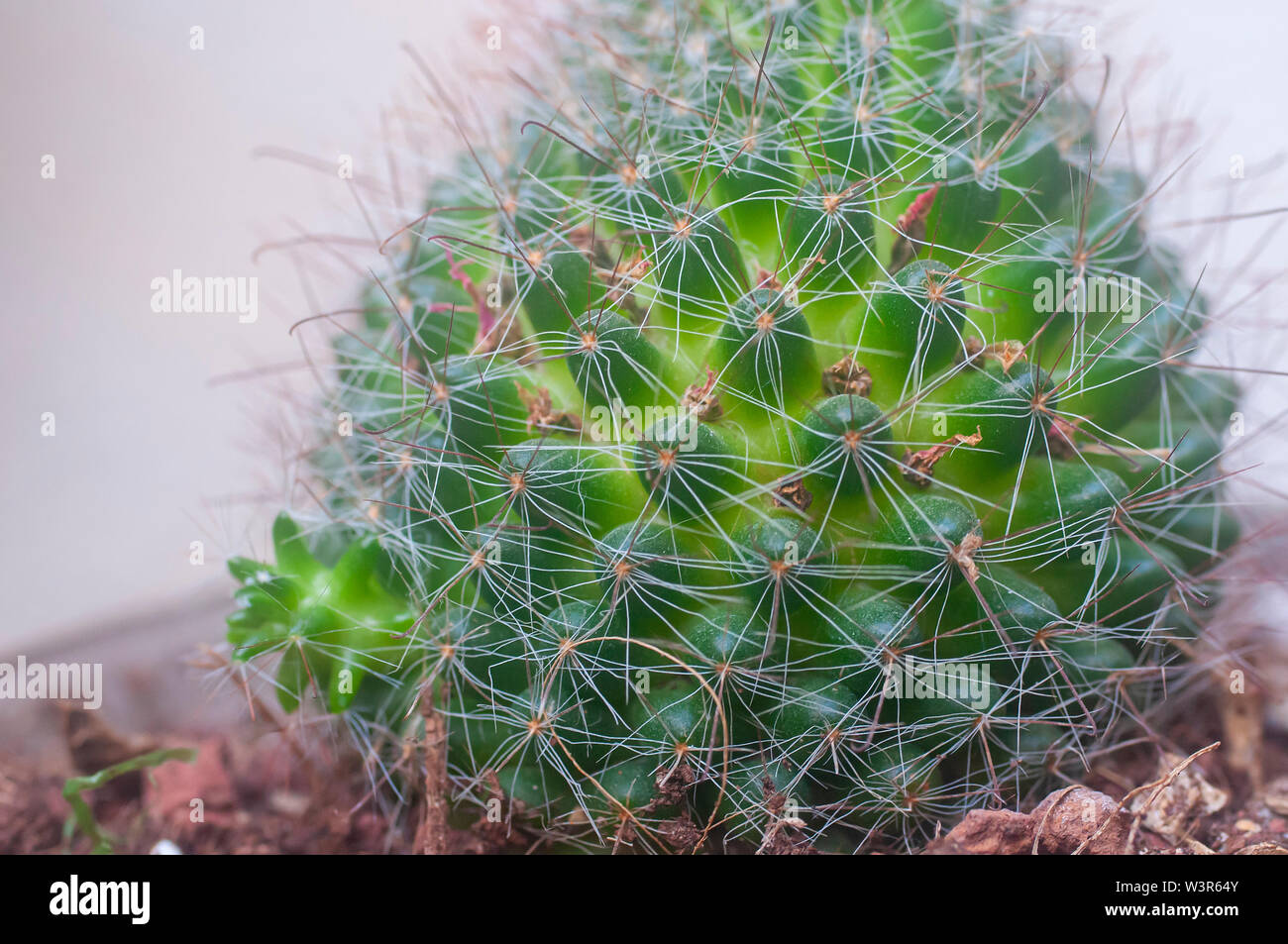 Vegetative Propagation High Resolution Stock Photography And Images Alamy