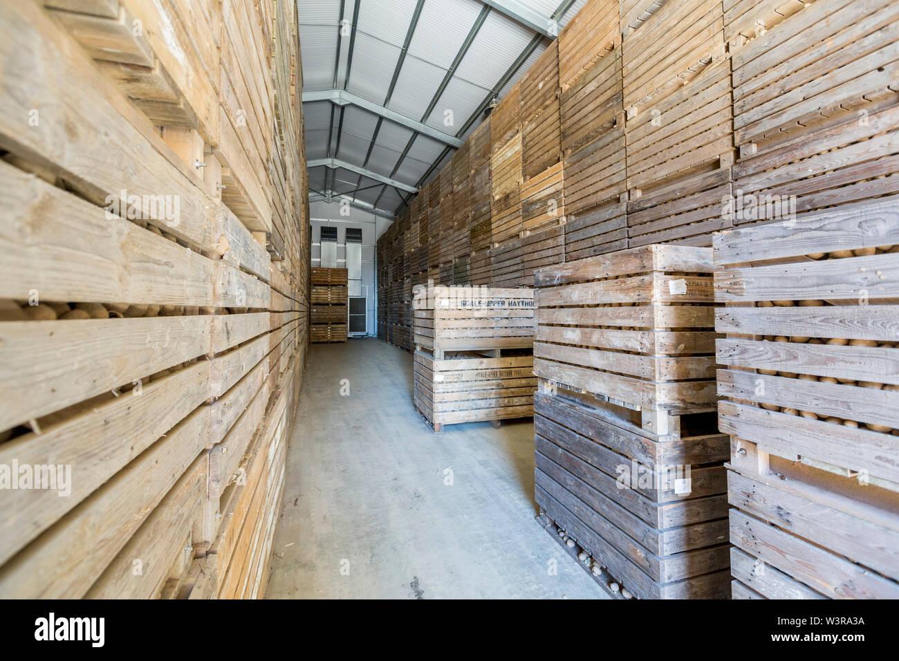 Potato storage crates inside a chilled storage barn, Pembrokeshire.  ©James Davies Photography - Stock Image
