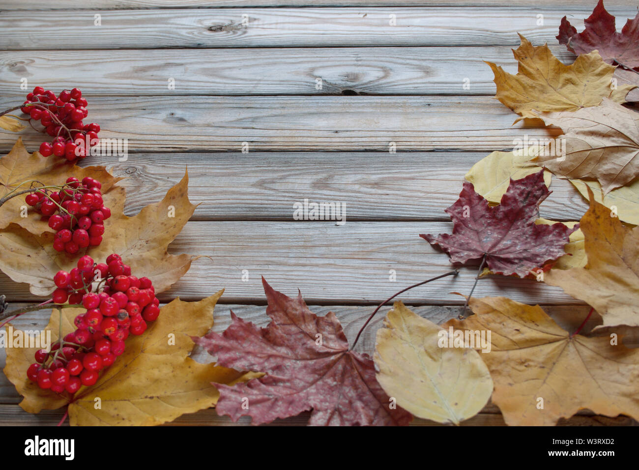 Branches of rowan tree and dry autumn leaves are lying on a wooden desk. Autumn still life. Copy space for your text. - Stock Image