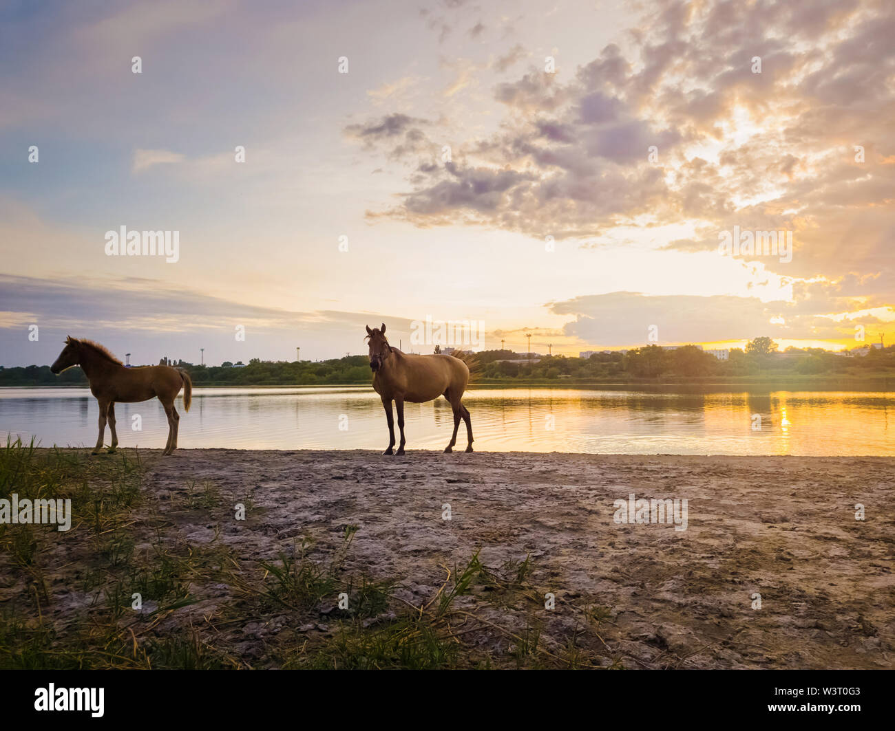 Two brown horses, young foal and his mother mare, standing near pond, watering over sunset background with reflection on the lake surface. - Stock Image