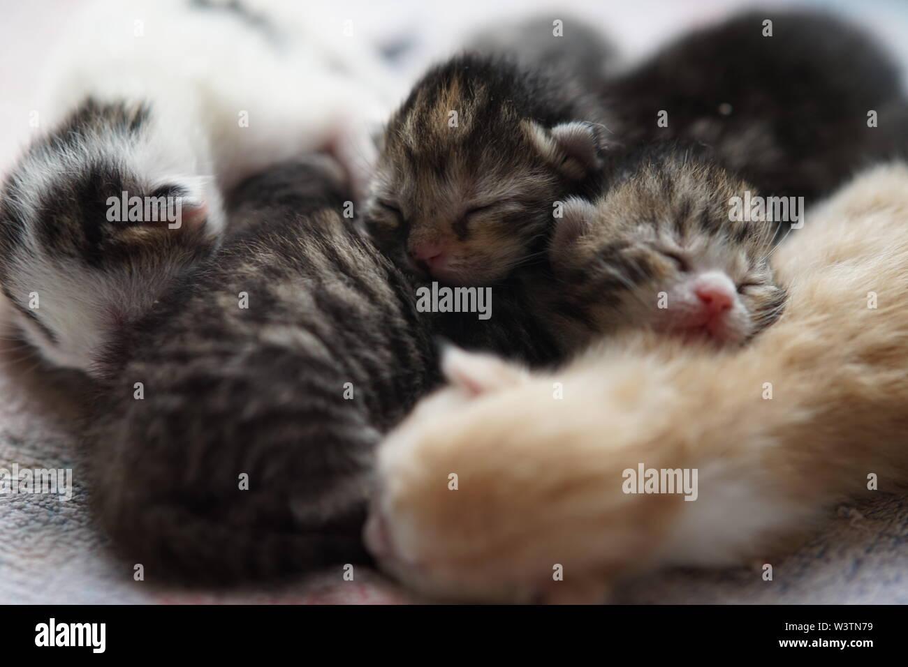 Cute newborn kittens sleeping, baby animals sleep, lovely family - Stock Image
