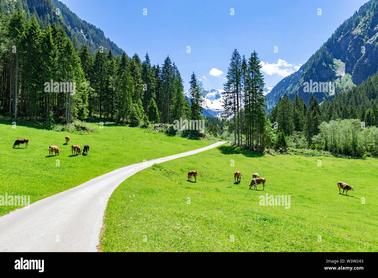 Idyllic mountain landscape with cows grazing in the Alps Stock Photo