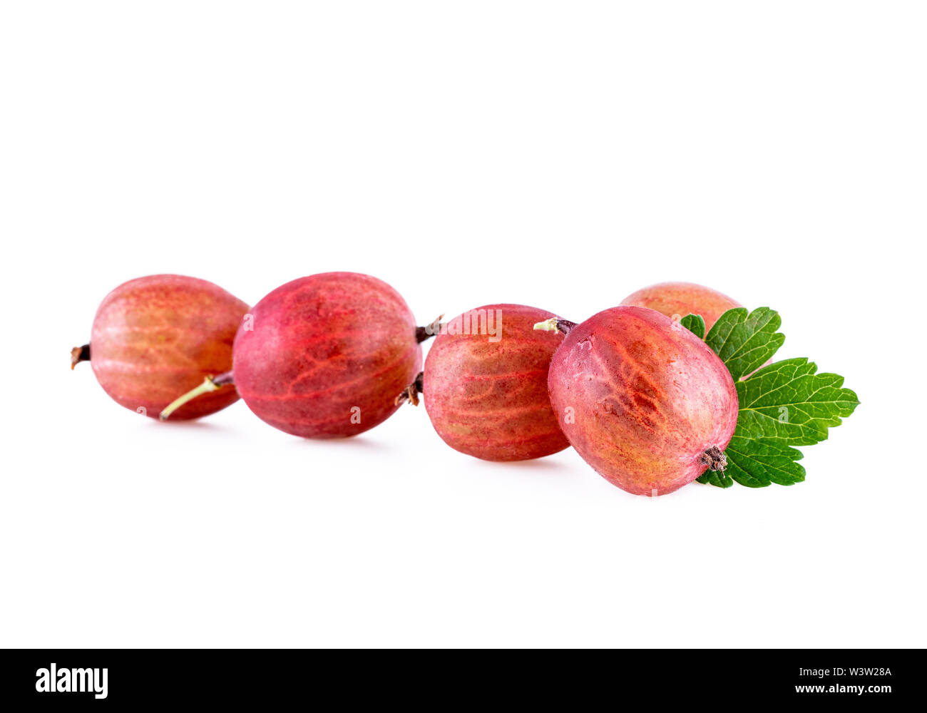 Gooseberries in a row isolated on white - Stock Image
