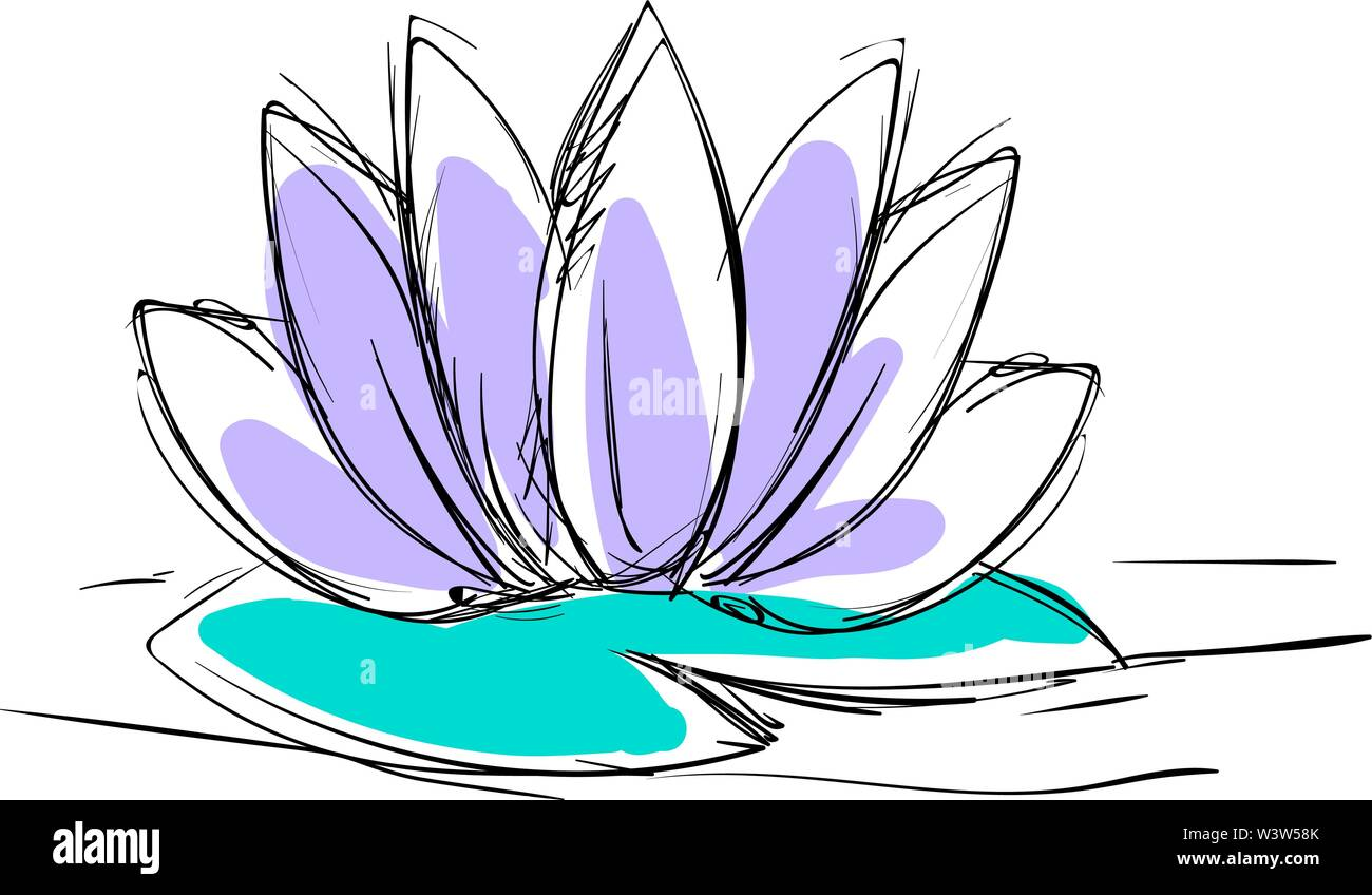 Lotus flower drawing, illustration, vector on white background. - Stock Image