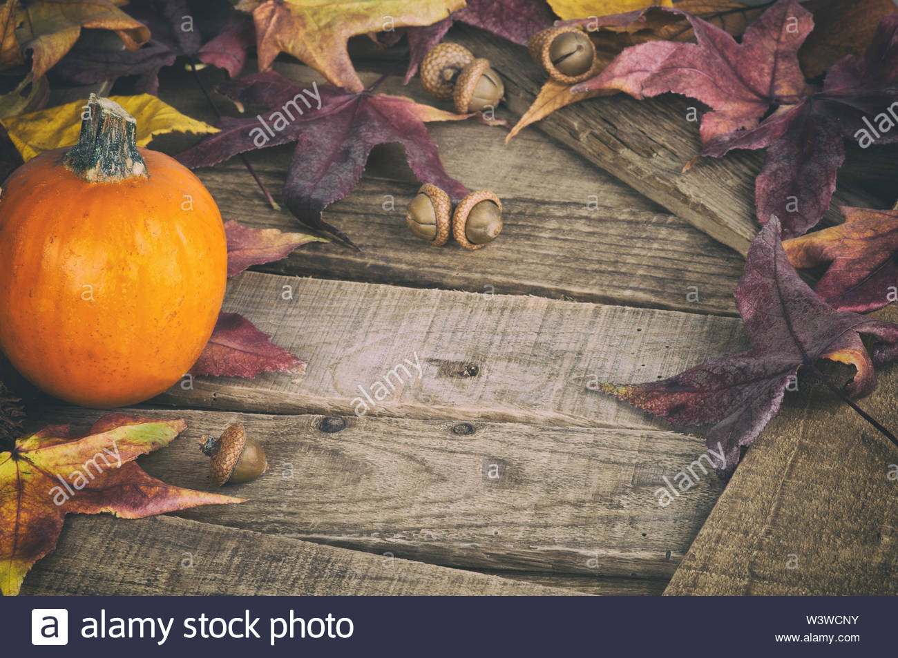 Fall Still Life with Mini Pumpkin and Maple Leaves on Rustic Wood boards as a Thankgiving or Halloween design element with copy space. - Stock Image
