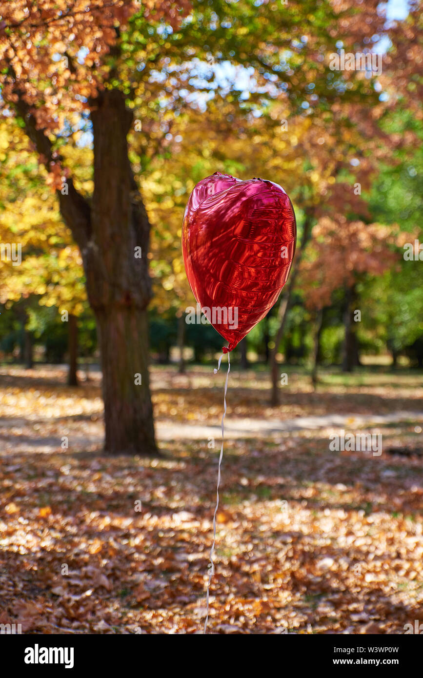 red balloon flies in the autumn park against the background of fallen yellow foliage and trees - Stock Image