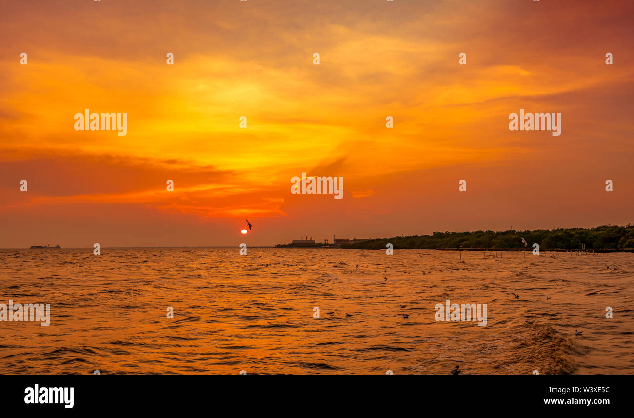 Beautiful sunset sky and clouds over the sea. Bird flying near abundance mangrove forest. Mangrove ecosystem. Good environment. Landscape of seashore - Stock Image