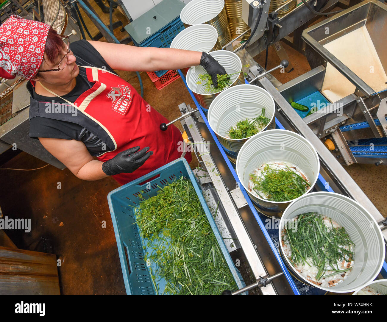 18 July 2019, Brandenburg, Lübbenau: Viola Hellwig, employee of Spreewaldmüller GmbH & Co. KG, places herbs and spices in large cans, which are then filled with pickled gherkins in the next step. In many places in the Spreewald, emphasis is still placed on gentle manual work. At Spreewald Müller the processing of the well-known Spreewald cucumber is currently in full swing. The 25 employees of the family business process between 15 and 18 tons of cucumbers every day. Photo: Patrick Pleul/dpa-Zentralbild/ZB - Stock Image