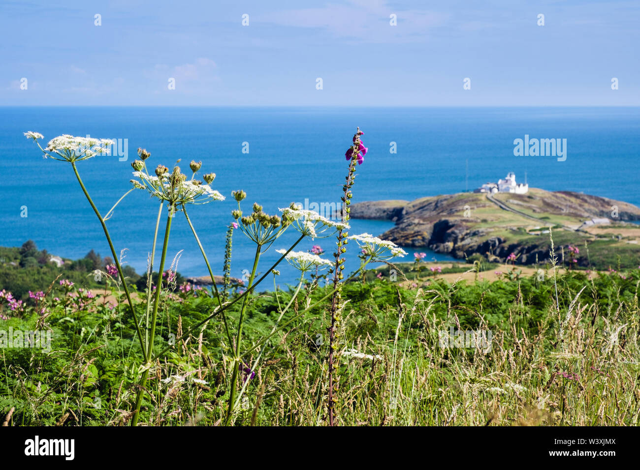 View to Point Lynas / Trwyn Eilian and coast with wildflowers in summer. Llaneilian, Isle of Anglesey, north Wales, UK, Britain - Stock Image