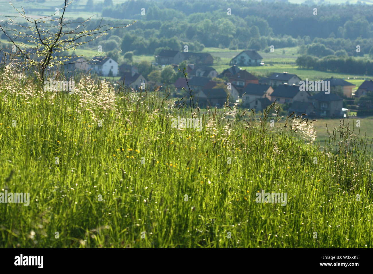 Beautiful sunny meadow with long grass. Houses in valley - Stock Image