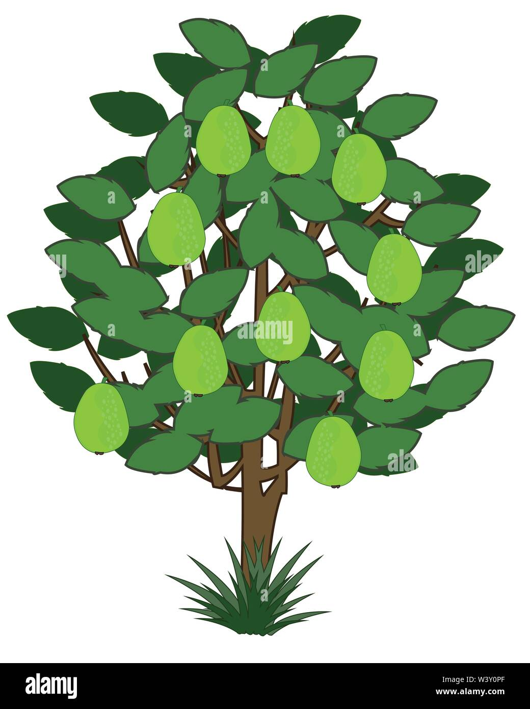 Vector illustration tree with exotic fruit guava - Stock Vector