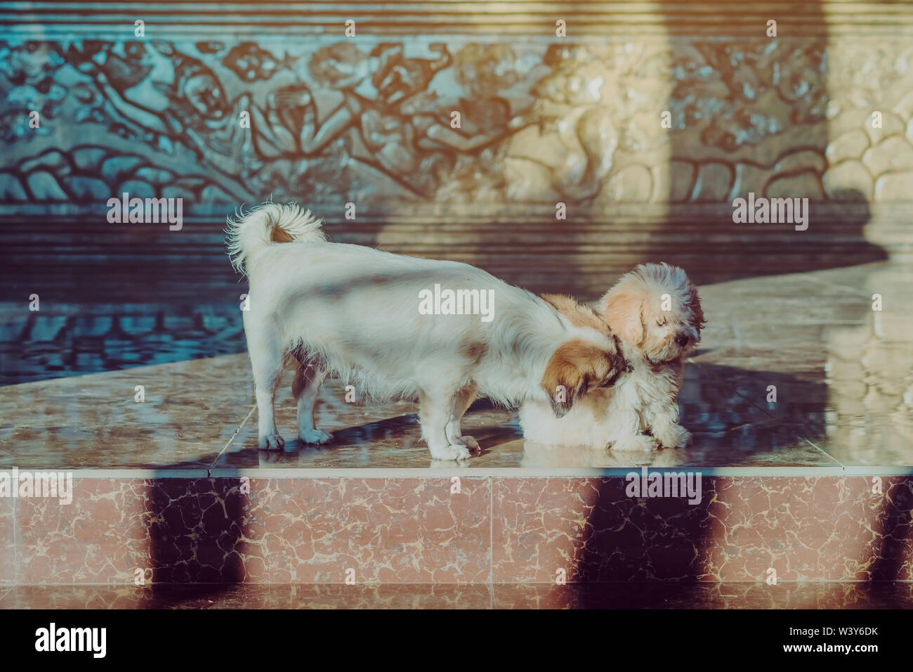Little cute dogs wait to welcome guests in front of the hotel in the morning. - Stock Image