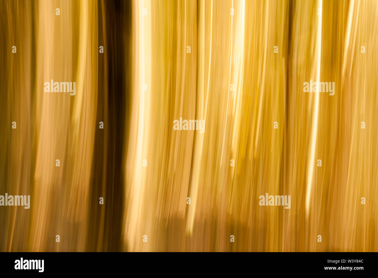 Full-frame view of a long exposure horizontally swiveled in the forest. - Stock Image