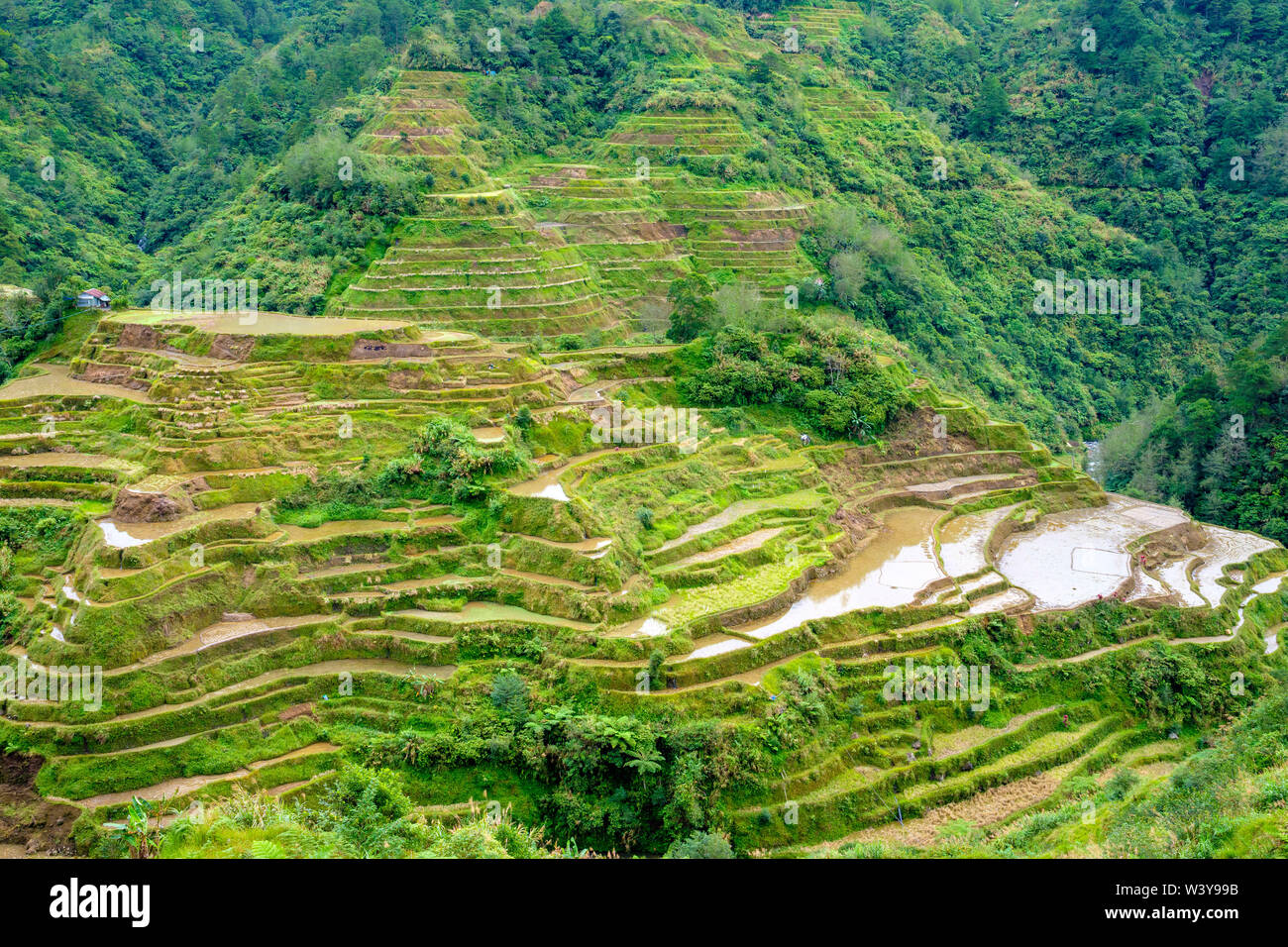 Banaue rice terraces in early spring, Mountain Province, Cordillera Administrative Region, Philippines Stock Photo