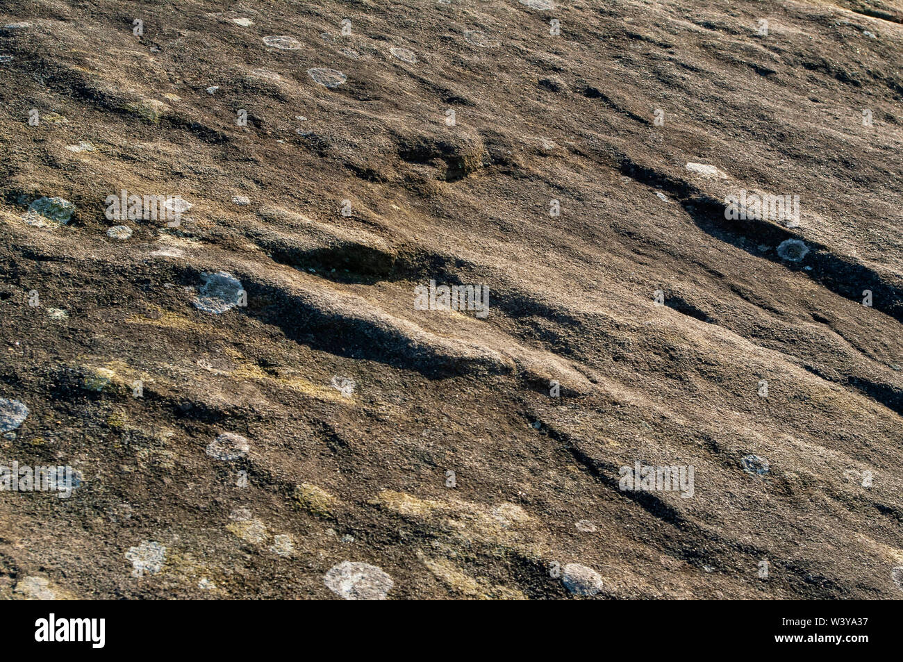 Close-up of a gritstone slab in bright sunshine with small lichen growths at Gardom's Edge, near Baslow, Derbyshire Stock Photo