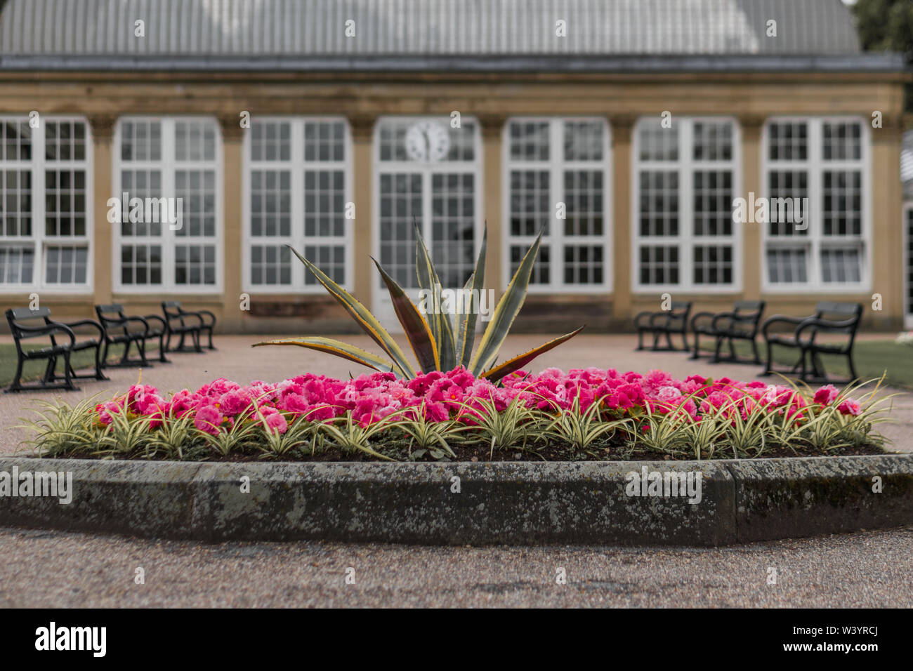 Pink Flowers on display bloom at the Sheffield Botanical Gardens, South Yorkshire, UK. Taken in Summer of 2019 Stock Photo