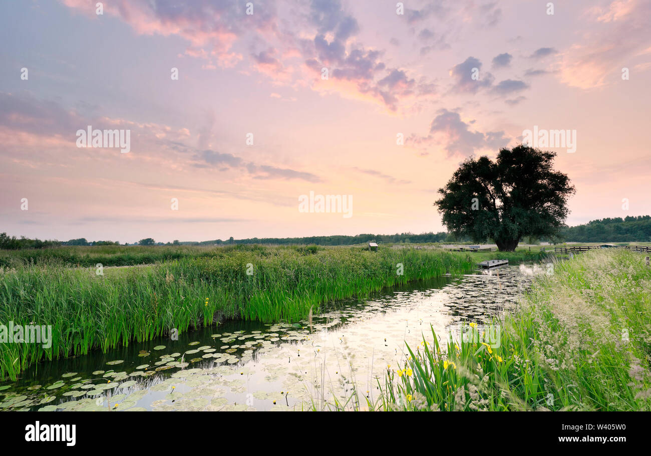 serene sunrise over river and lone tree in summer - Stock Image