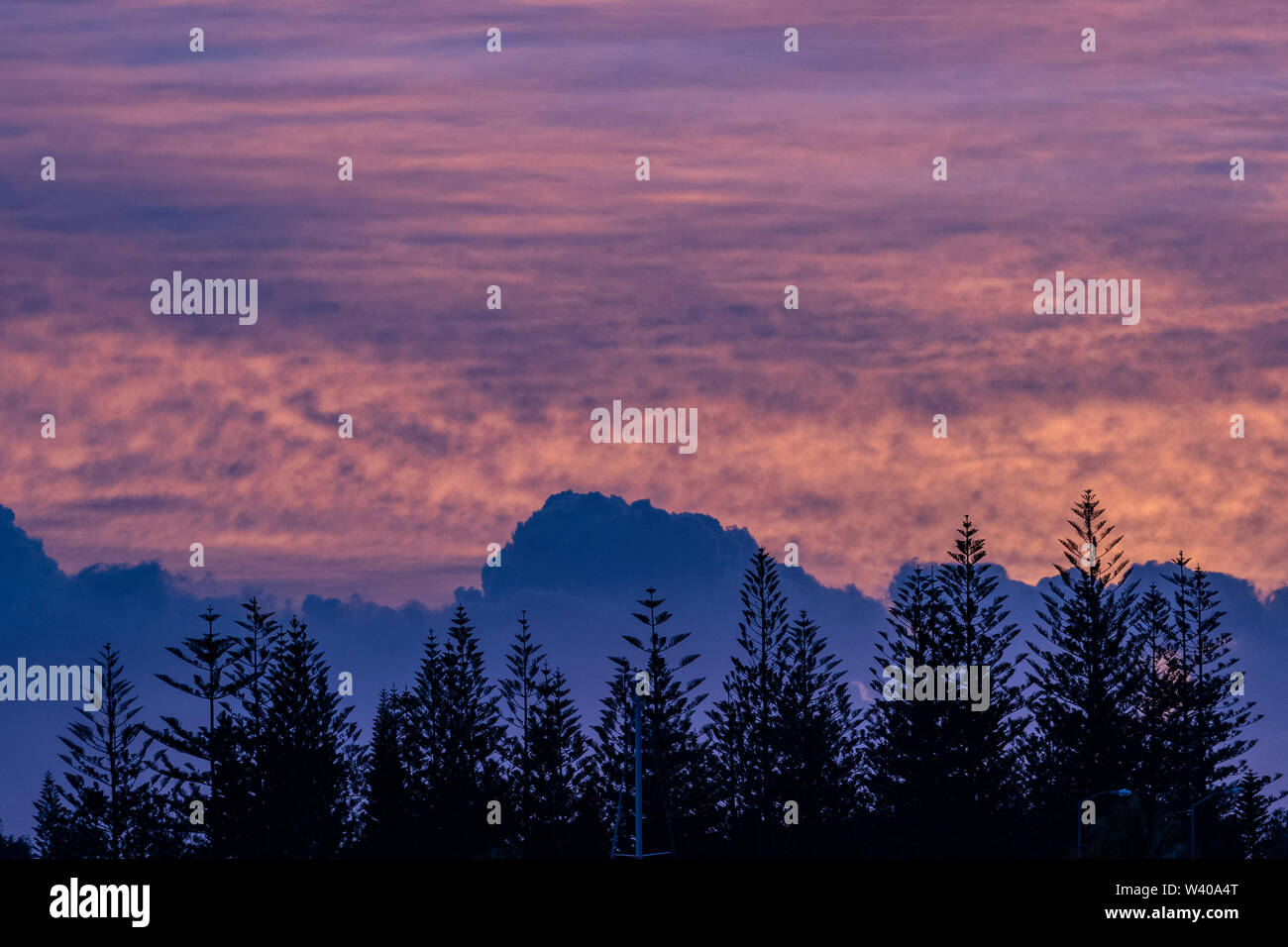 A line of Norfolk Pine trees are silhouetted by blue hour over the Nerang River, Queensland. - Stock Image