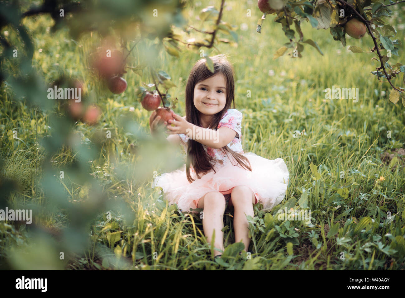 Fruit diet for child health, vitamin. Fruit garden with little girl picking up apples. - Stock Image
