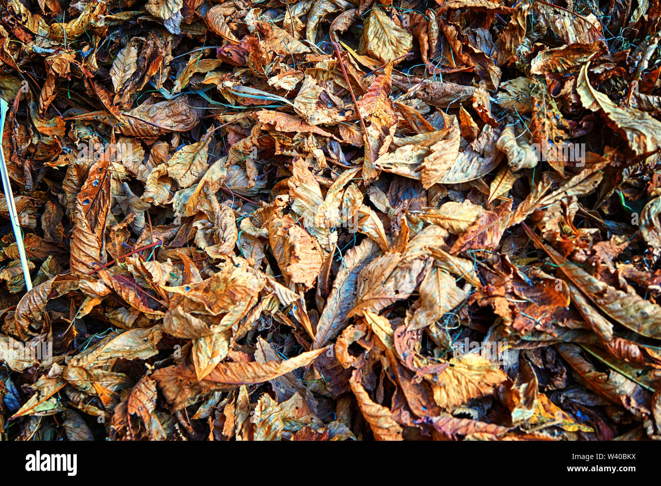 Background of autumn leaves. Colorful autumn background. - Stock Image