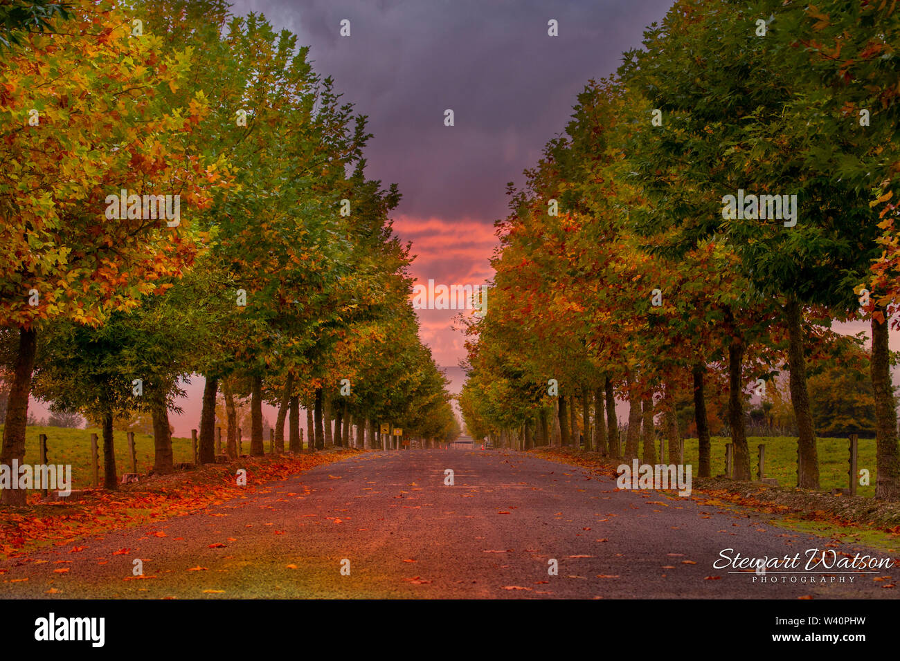 Tree lined road in Autumn at sunset - Stock Image