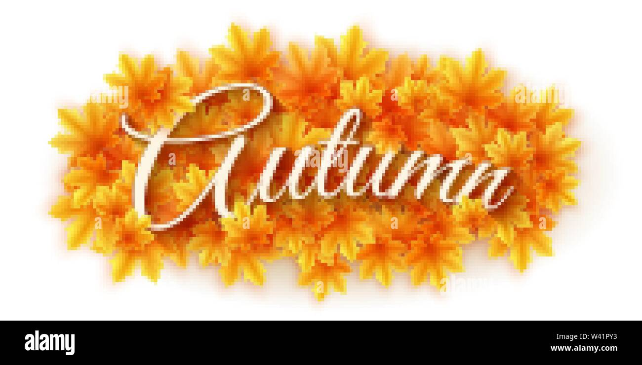 Autumn backgound. Scattered maple leaves isolated on white background with text. Autumn leaf bouquet. Seasonal banner for your design. Vector illustra - Stock Image