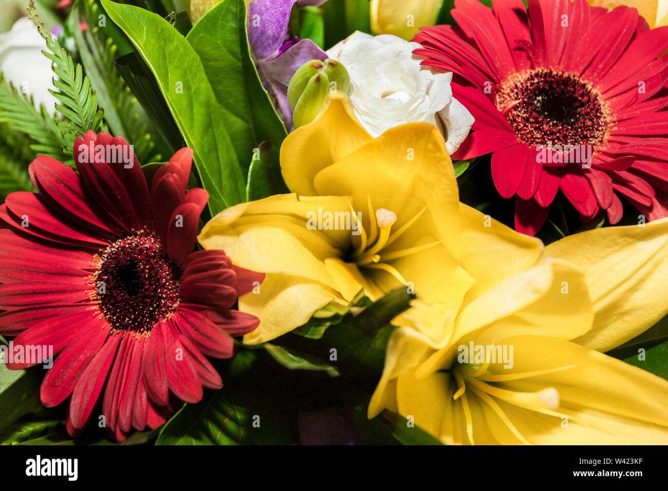 Yellow lilies and red Daisies flowers together in a bunch of  gifts in a fancy gift shop - Stock Image