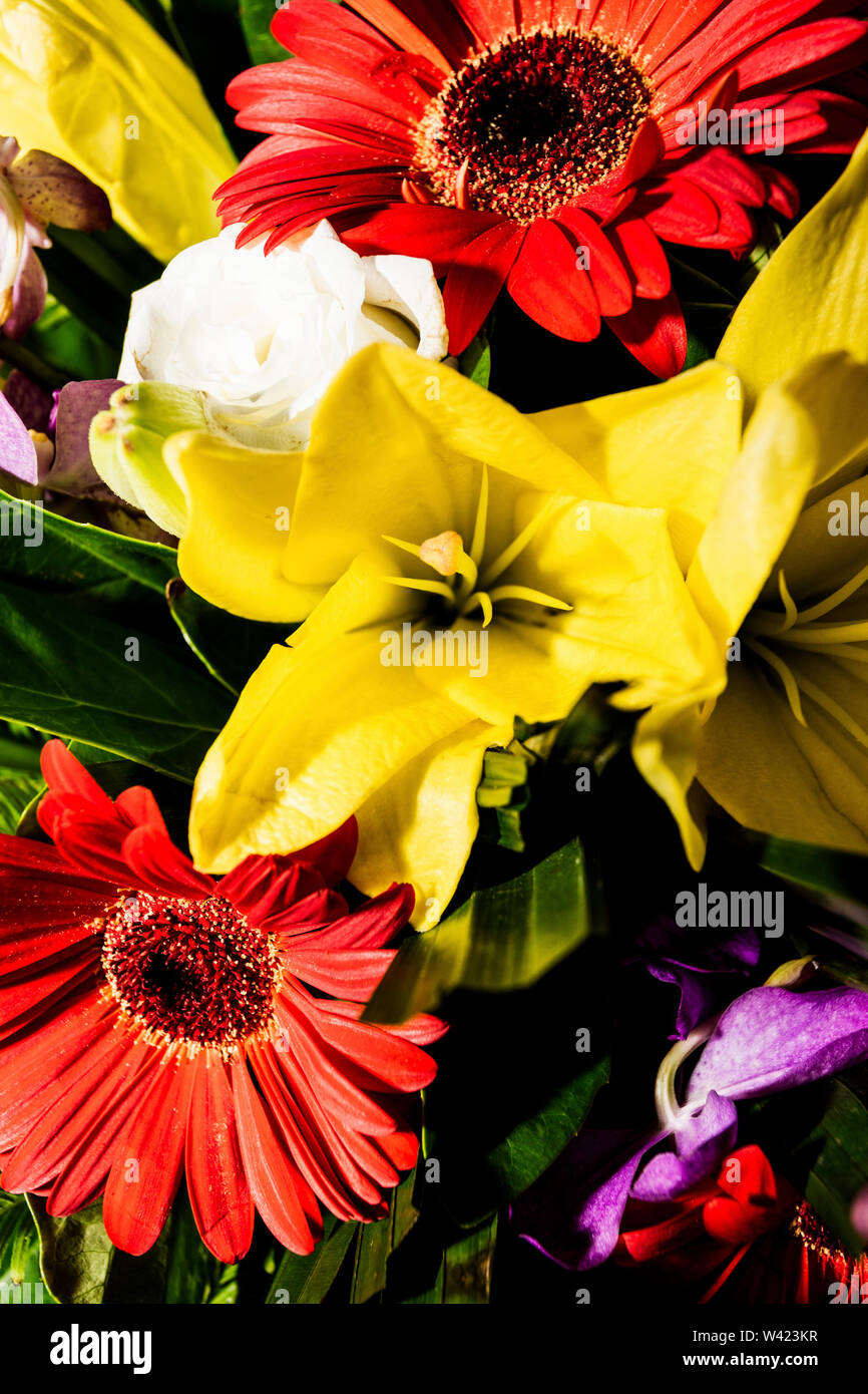 Bouquet of gerbera and lilies in a bunch of flowers with green leaves around close up - Stock Image