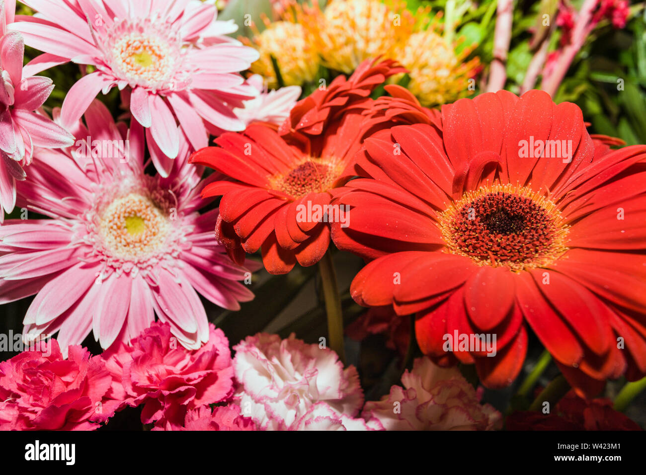 Red and pink gerbera and little carnations in a same bunch of flowers in a gift shop - Stock Image