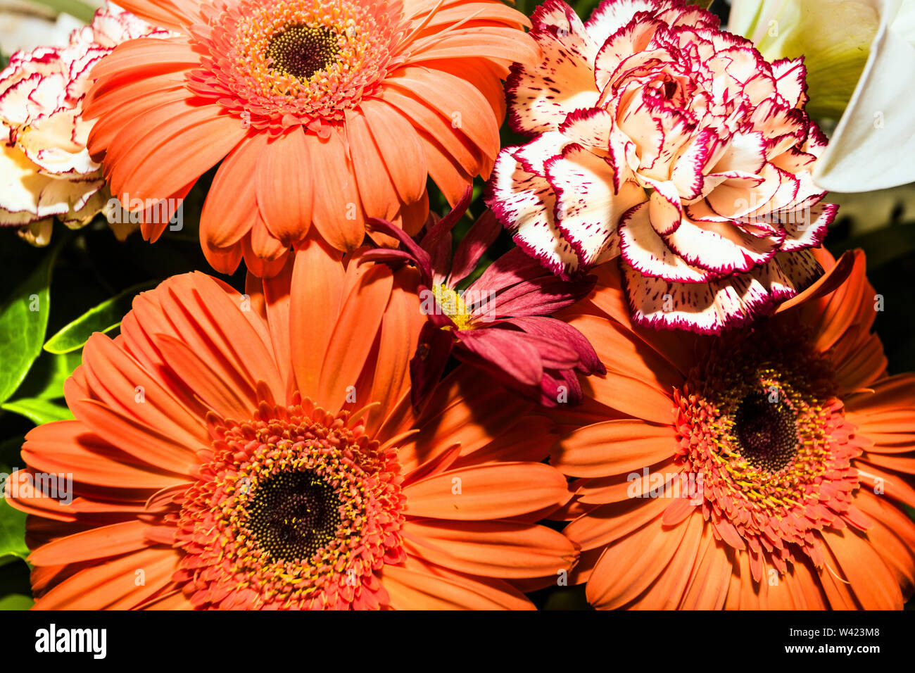 Gerberas and Carnation flowers together in a single bunch close up giving very attractive looking colors - Stock Image