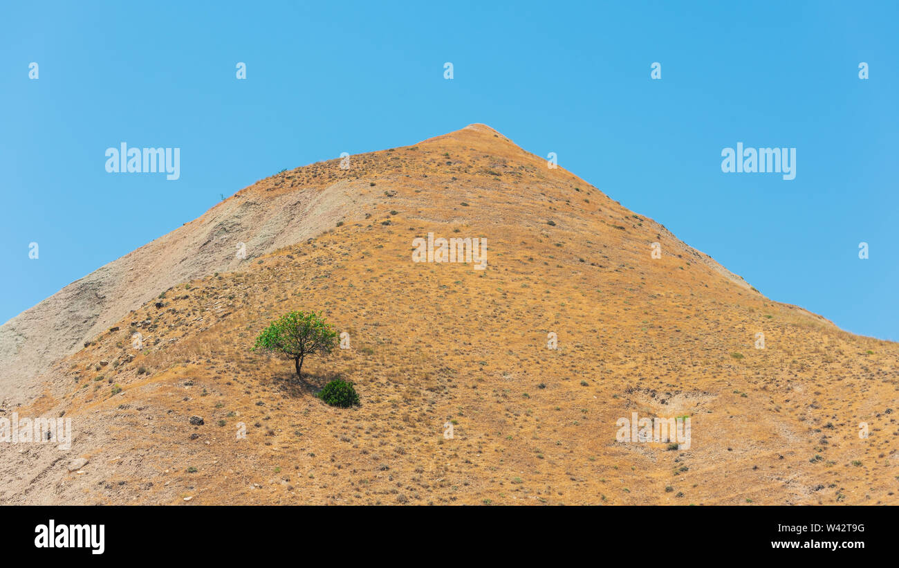 Lonely tree on a mountain top Stock Photo