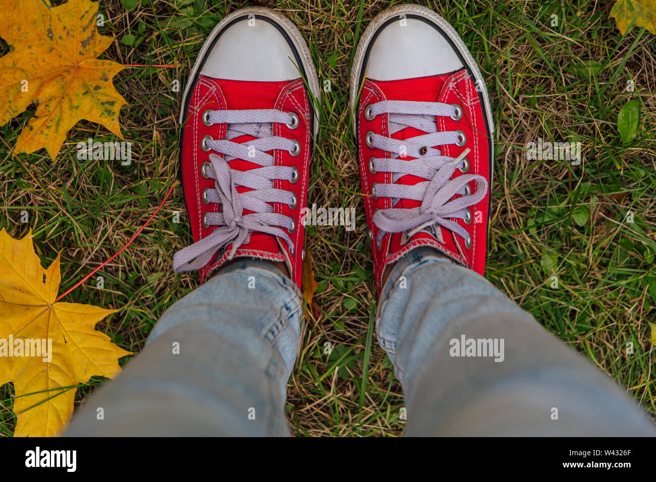 Red old canvas sneakers on the fallen autumn leaves. Top view - Stock Image