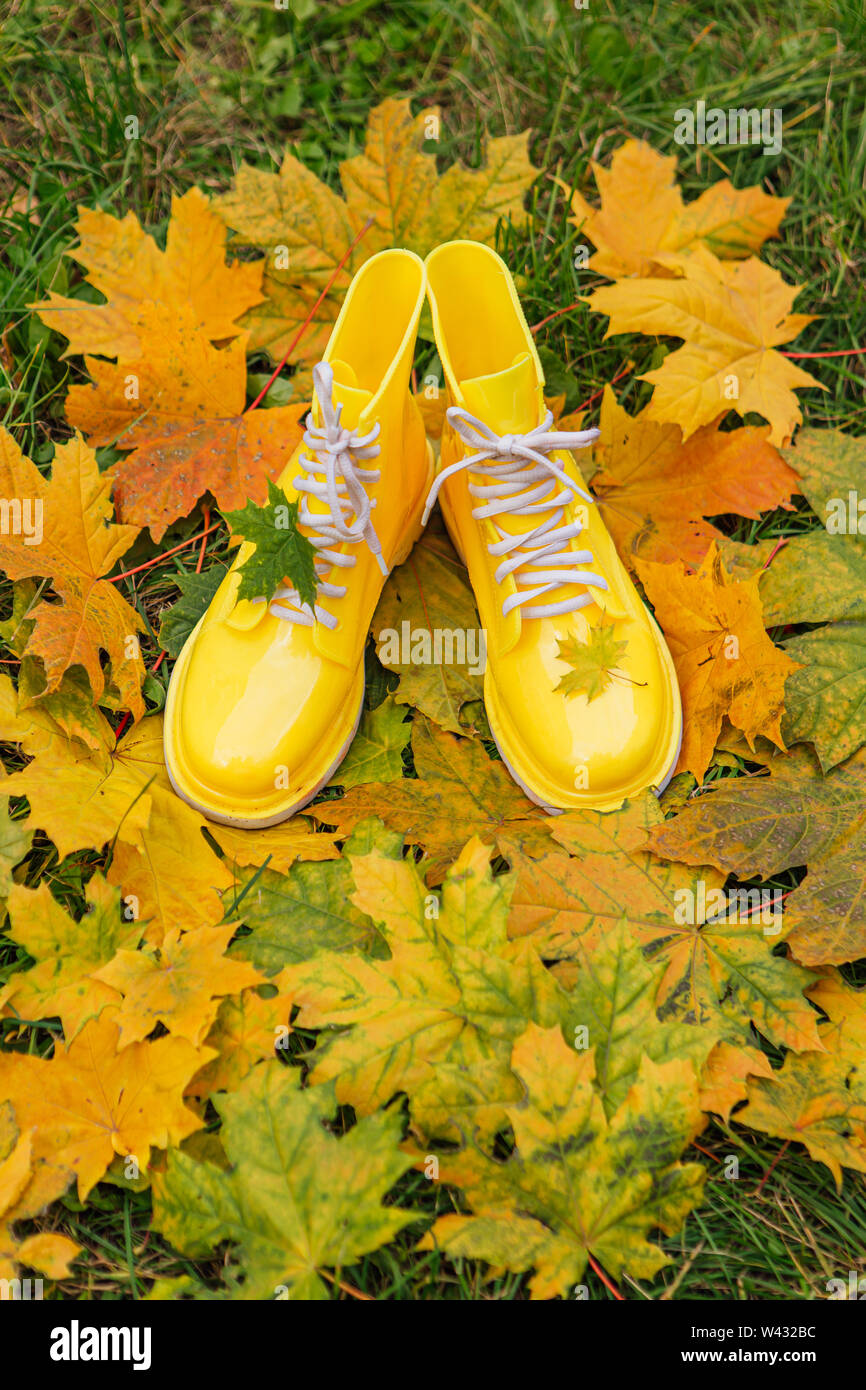 Yellow rubber boots and yellow maple leaves on a wet grass. Autumn season concept. Maple leaf on the rubber shoe. - Stock Image