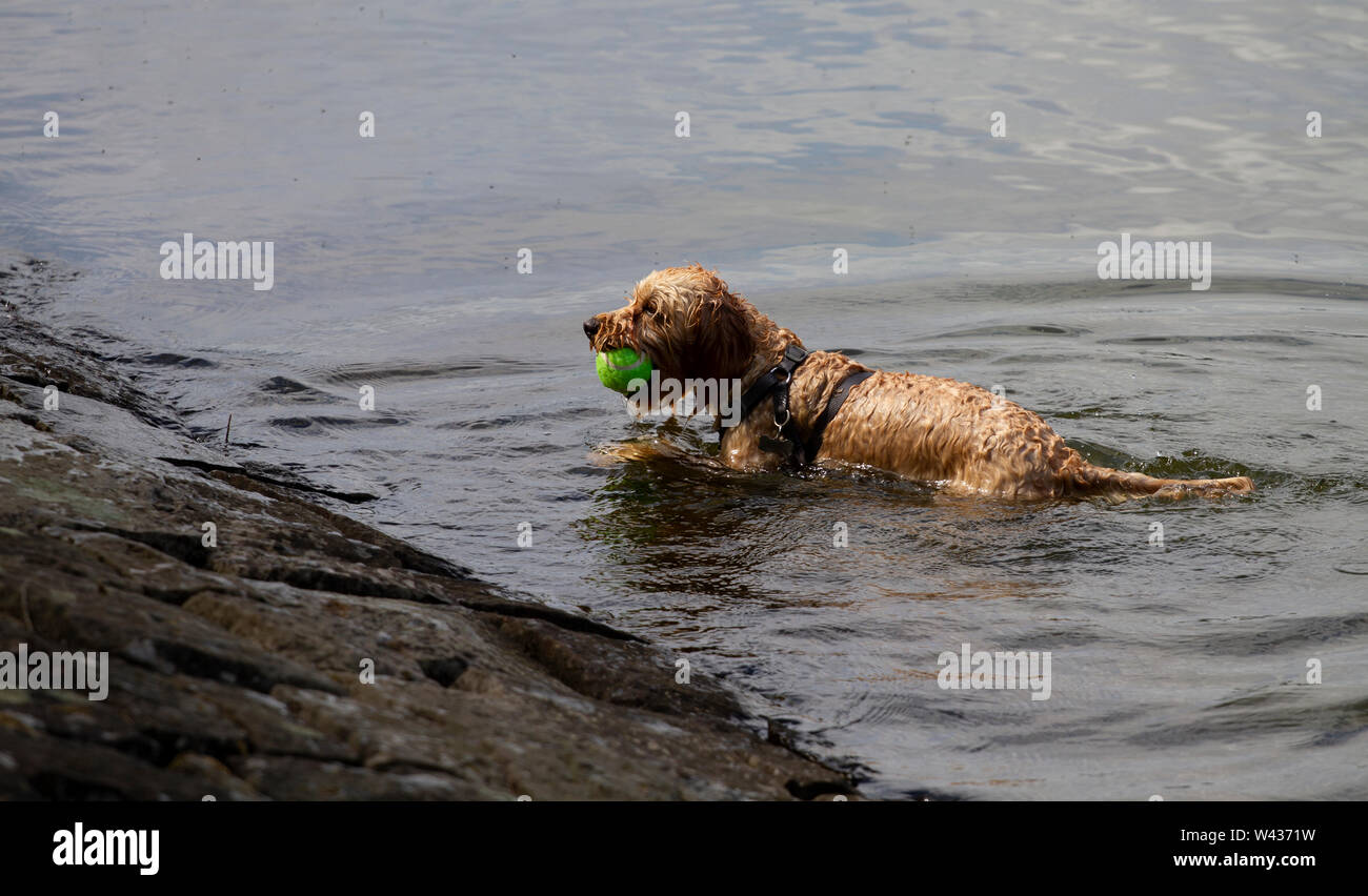 Breed Of Dog From Scotland High Resolution Stock Photography And Images Alamy