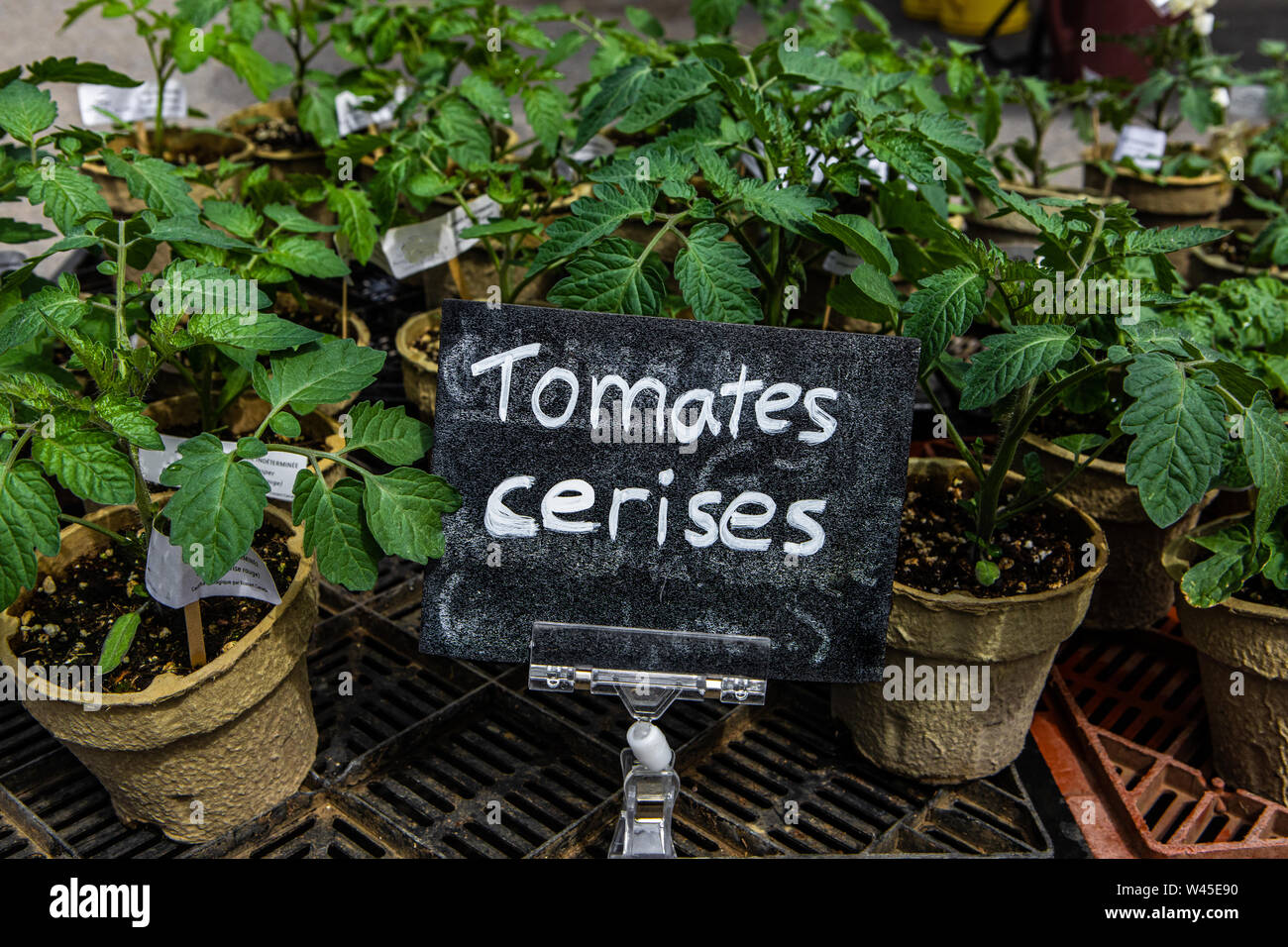 Planter Des Tomates En Pot a closeup view of a small french sign saying cherry tomatoes