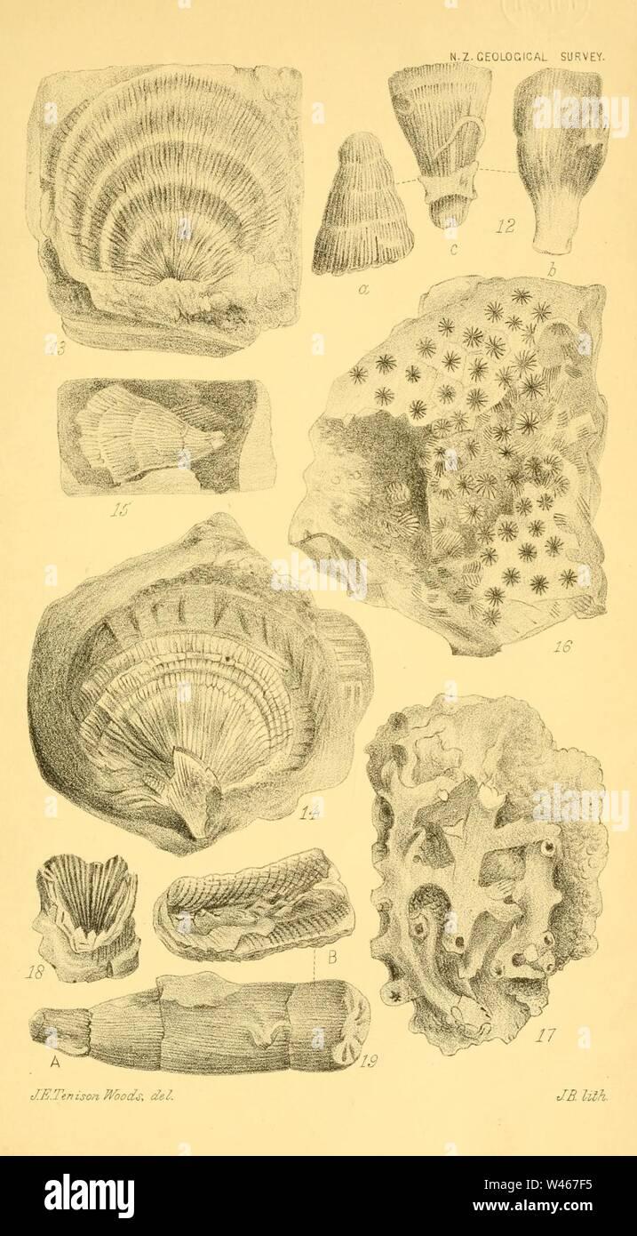 Corals and bryozoa of the neozoic period in New Zealand (Figs. 12-19) Stock Photo