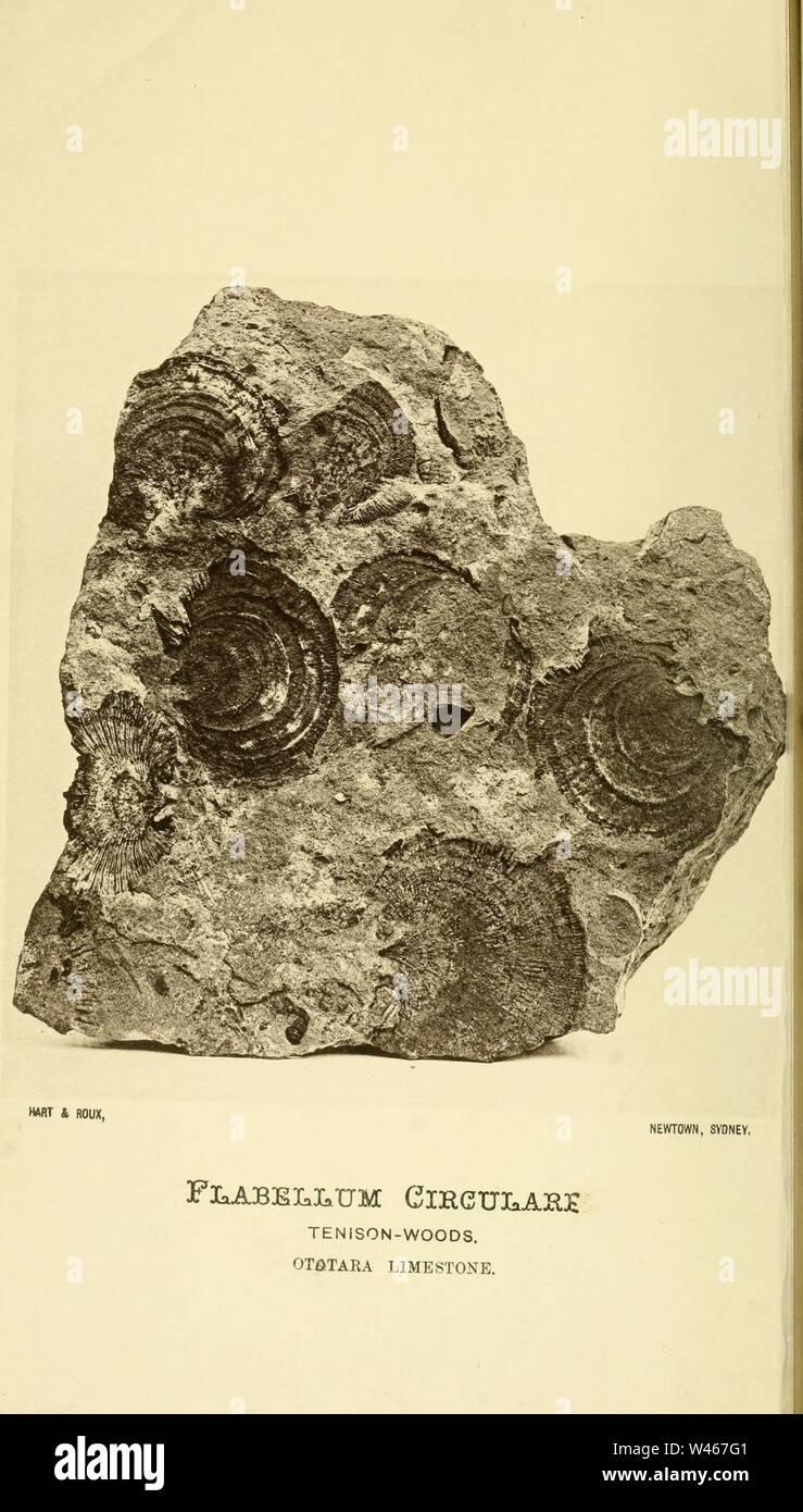Corals and bryozoa of the neozoic period in New Zealand Stock Photo