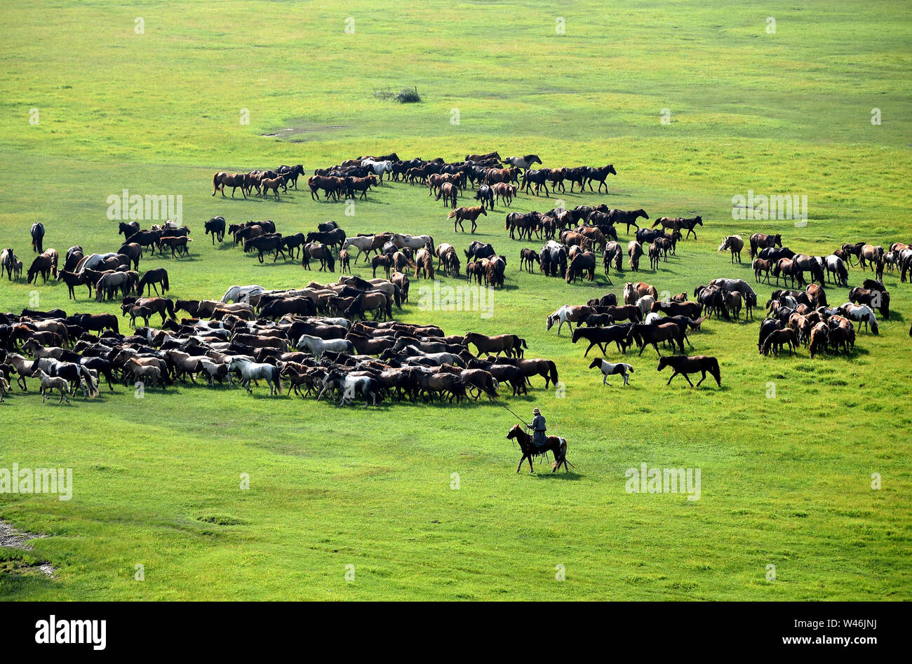 Xilingol, China's Inner Mongolia Autonomous Region. 20th July, 2019. A herdsman drives horses during an equine culture event in East Ujimqin Banner of Xilingol League, north China's Inner Mongolia Autonomous Region, July 20, 2019. Credit: Ren Junchuan/Xinhua/Alamy Live News - Stock Image