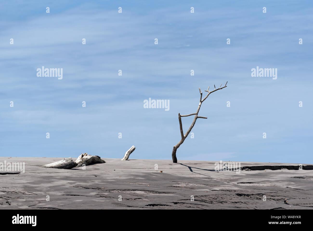 Dead tree on a sandbank in the estuary of the Rio Platana,l Panama Stock Photo