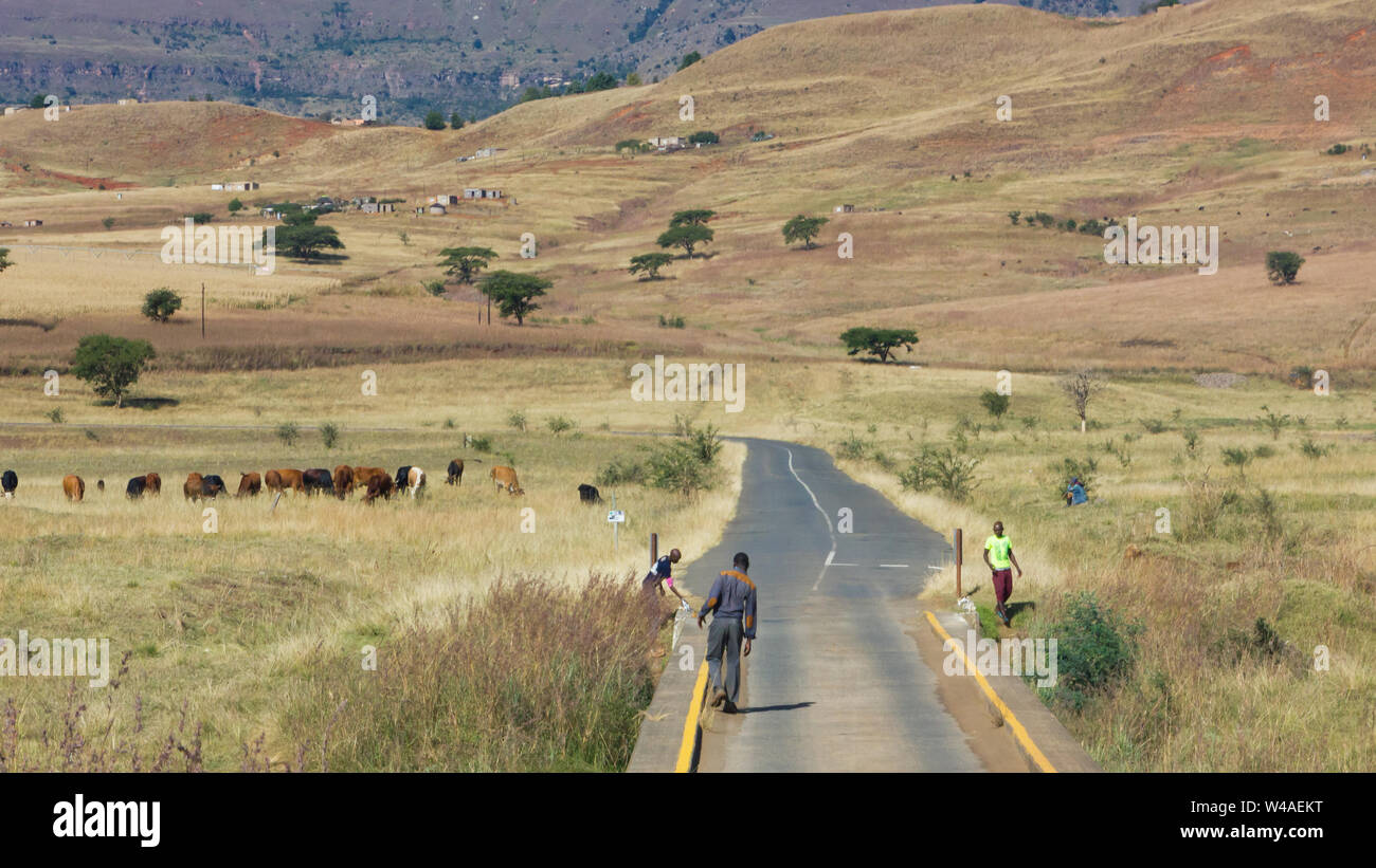 young black African herder boys on the road in rural Kwazulu Natal in South Africa looking after the cattle or livestock in the fields and hills Stock Photo