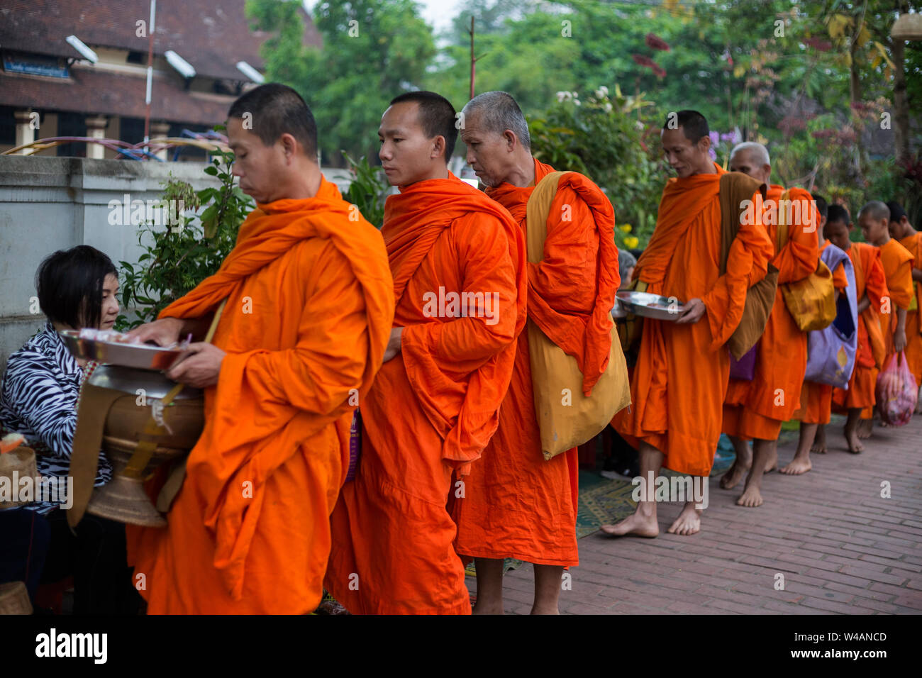 People giving alms to Buddhist monks on the street early in the morning in Luang Prabang, Laos. The ritual is called Tak Bat. Stock Photo