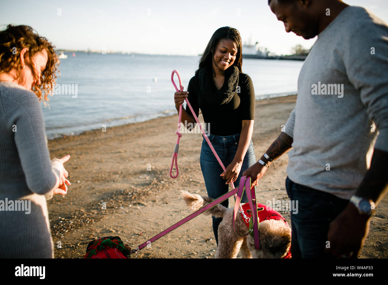 Blended family walking dogs on beach at sunset Stock Photo