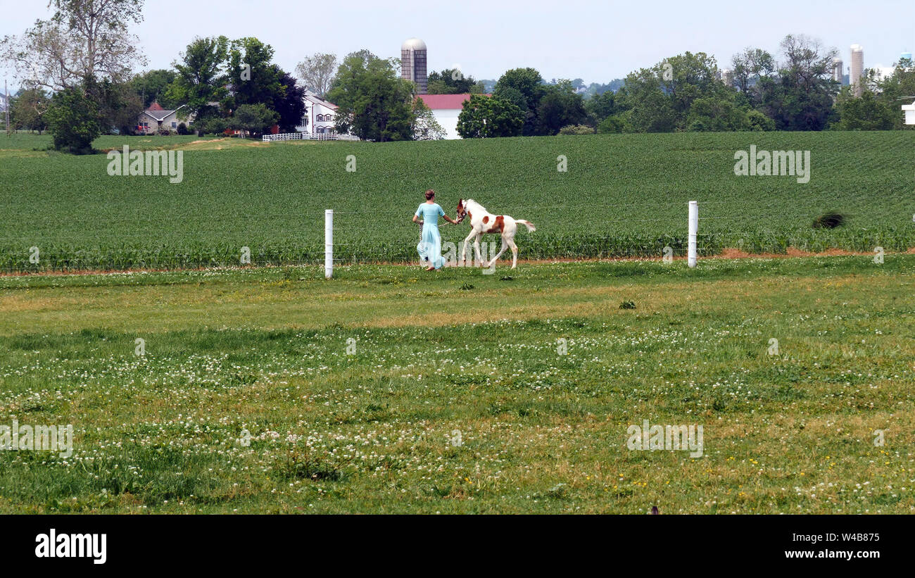 An Amish Girl Teaching a New Young Painted Horse to Run Stock Photo