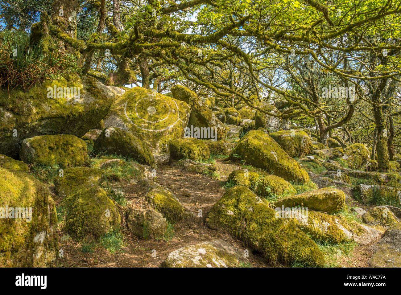 Sessile oaks and moss in Wistman's Wood Dartmoor Devon England UK GB British Isles Stock Photo