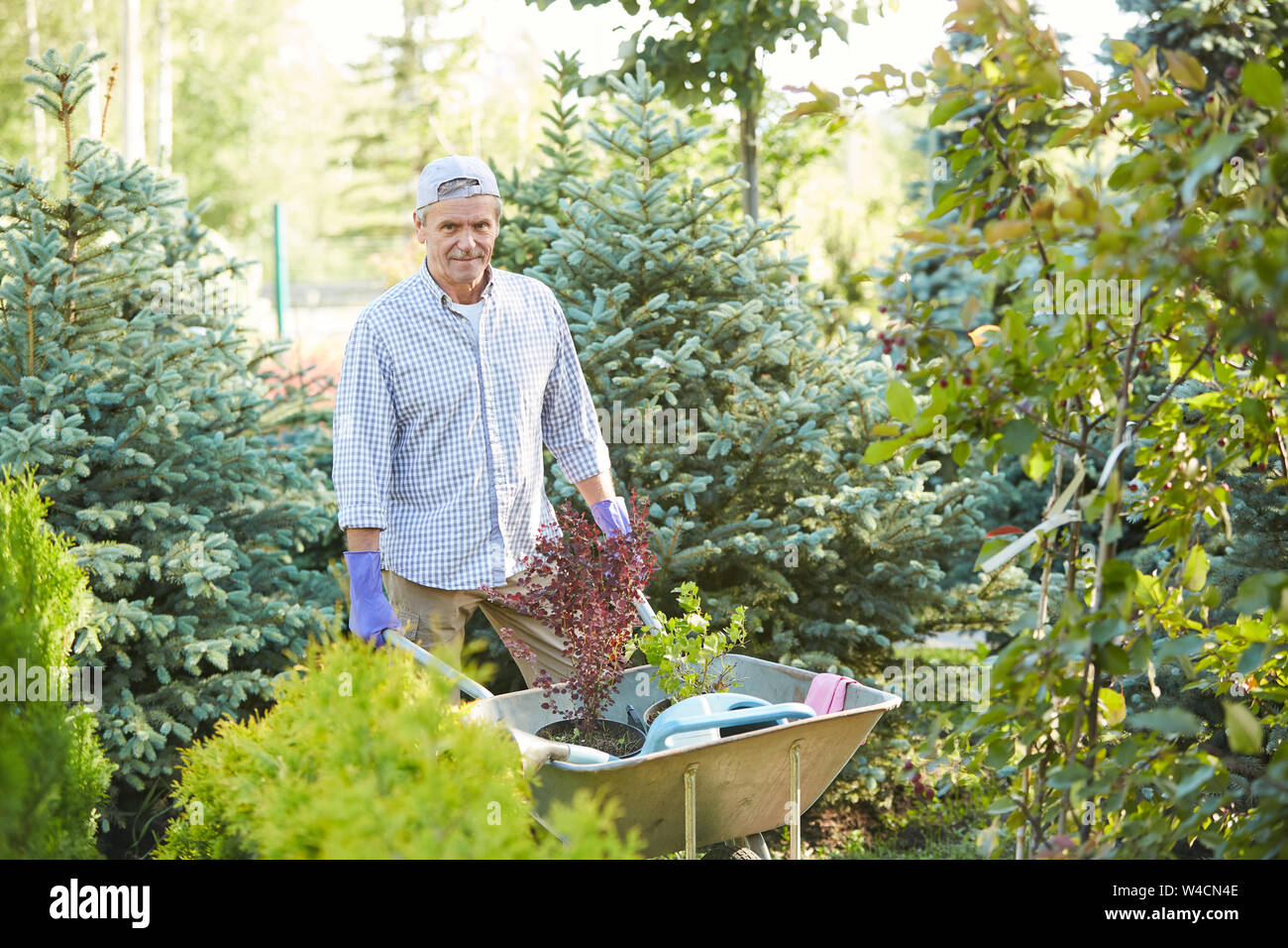 Portrait of mature man pulling cart while working in garden outdoors, copy space Stock Photo